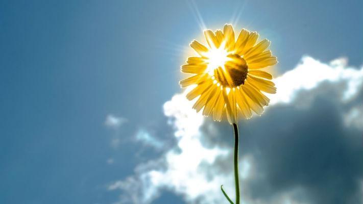 Сказка: Ветер и Солнце